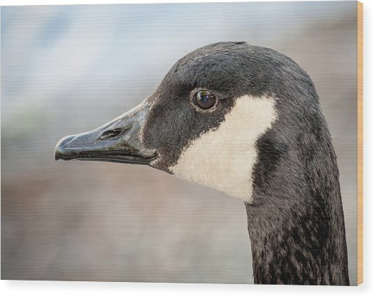 Goose Profile Wood Print