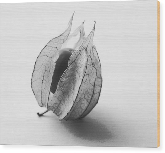 Gooseberry In Black And White Wood Print