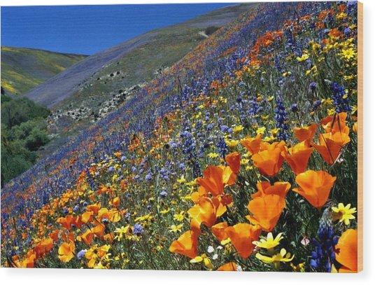 Gorman Flower Field In Full Bloom Wood Print