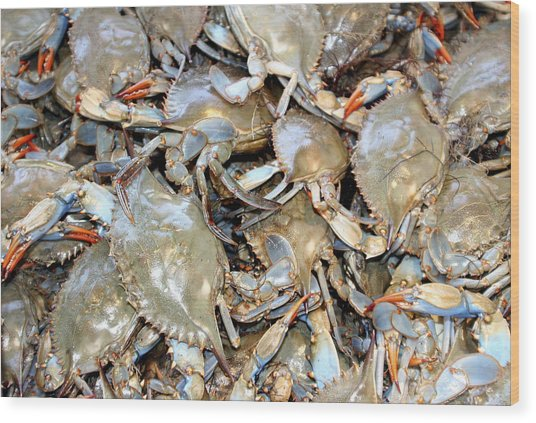 Blue Claw Crabs Wood Print