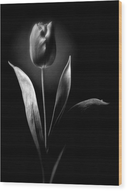 Black And White Tulips Flowers Art Work Photography Wood Print
