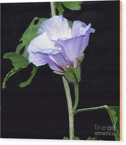 Graceful Purple Hollyhock Wood Print