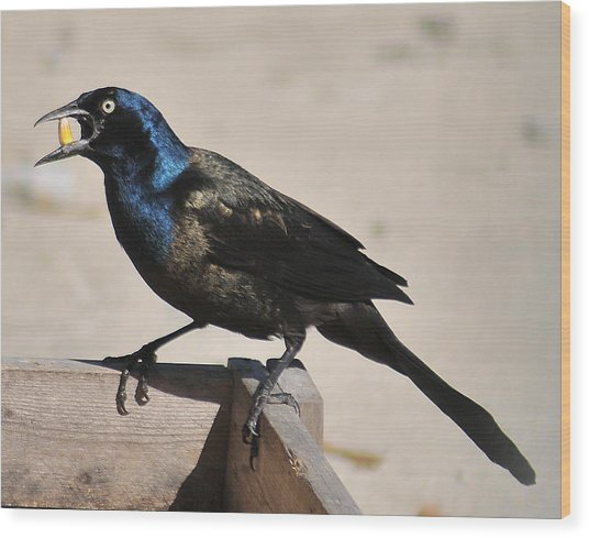 Grackle Chow Down Wood Print