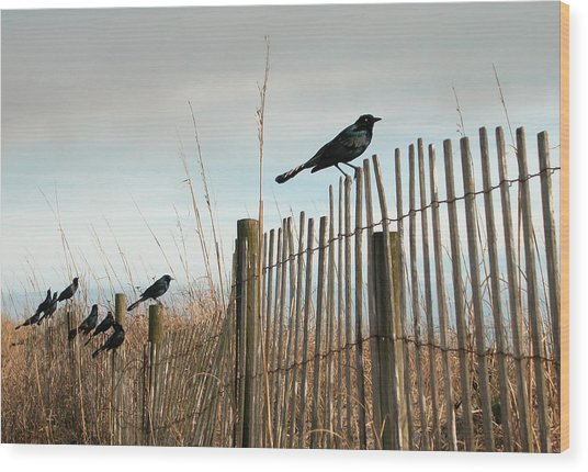 Grackles On A Fence. Wood Print