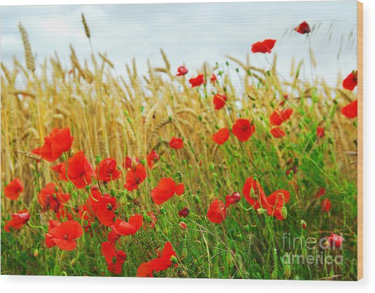 Grain And Poppy Field Wood Print