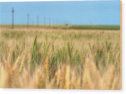 Grain Field - Hdr Photo Wood Print