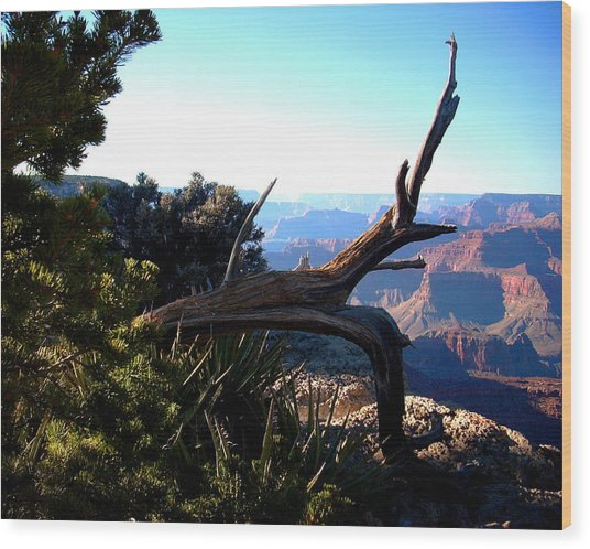 Grand Canyon Dead Tree Wood Print