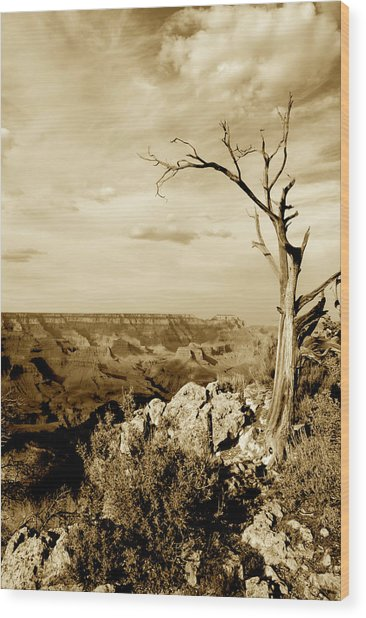 Grand Canyon Sepia Wood Print by T C Brown