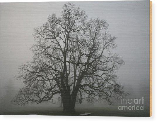 Grand Oak Tree Wood Print