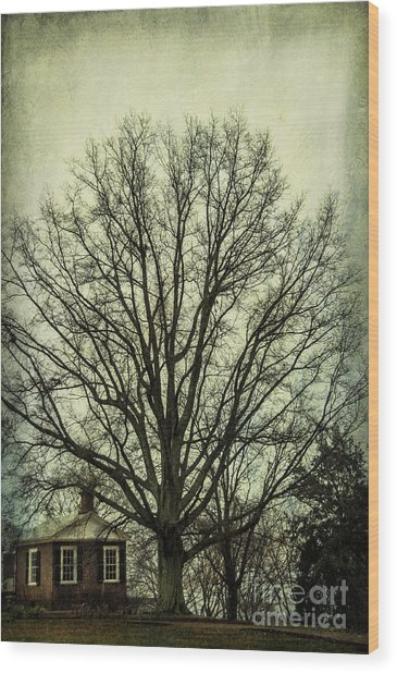 Grand Old Tree Wood Print