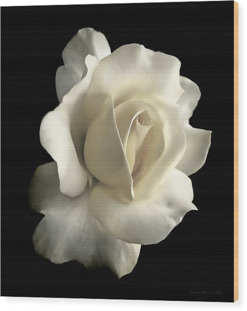 Grandeur Ivory Rose Flower Wood Print