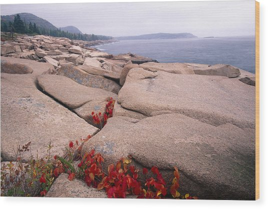 Granite Rocks Of Otter Point Acadia Natl Park Maine Wood Print by George Oze