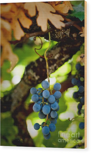 Grape Cluster Wood Print
