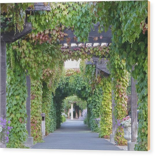 Grape Vine Covered Arbor Wood Print