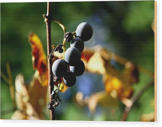 Grapes On The Vine No.2 Wood Print