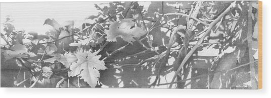 Grapevine 2002  Wood Print