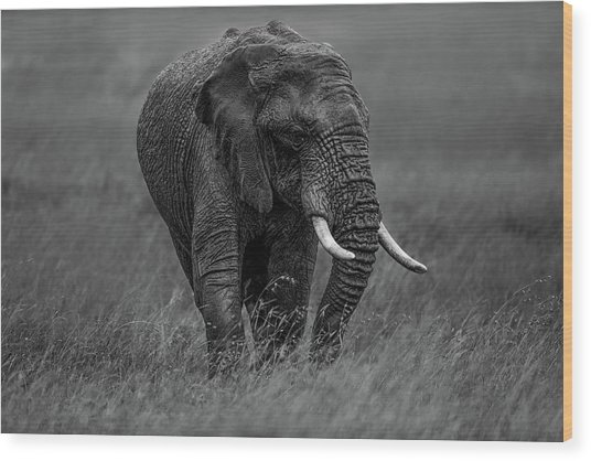 Graphite Wood Print by Massimo Mei