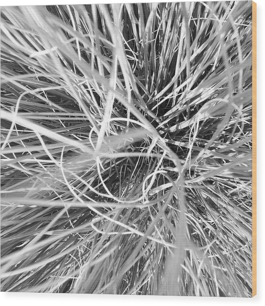 Grass Wood Print by Christy Beckwith