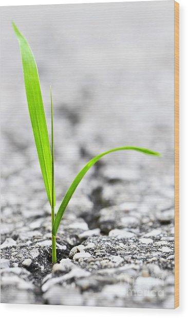 Grass In Asphalt Wood Print