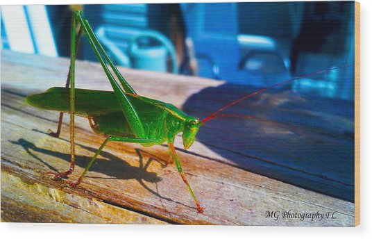 Wood Print featuring the photograph Grass Hopper by Marty Gayler