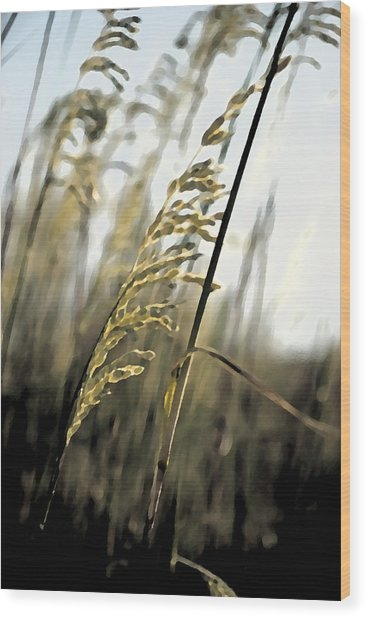 Grass In The Wind Pla 377 Wood Print