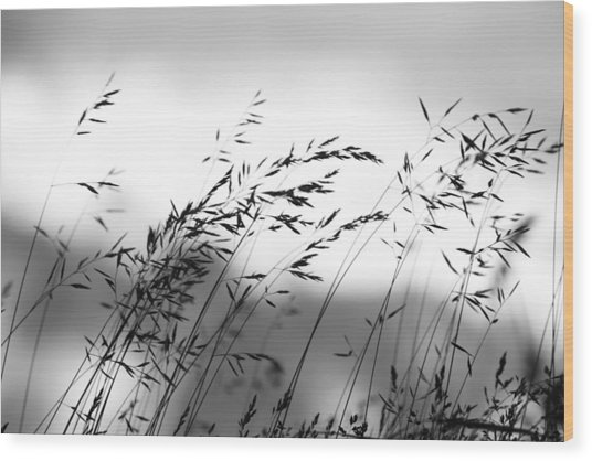 Grass On Mount Iwaki Wood Print
