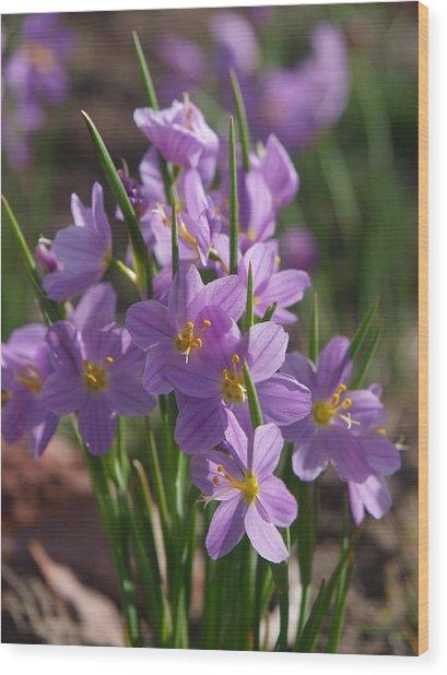 Grass Widow Wood Print