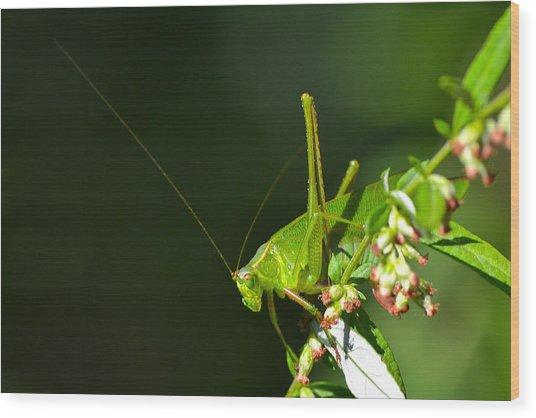 Grasshopper #1 Wood Print