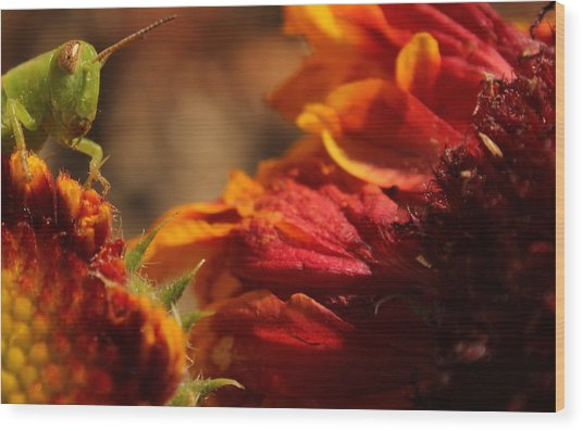 Grasshopper In The Marigolds Wood Print
