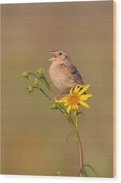 Grasshopper Sparrow Singing Wood Print