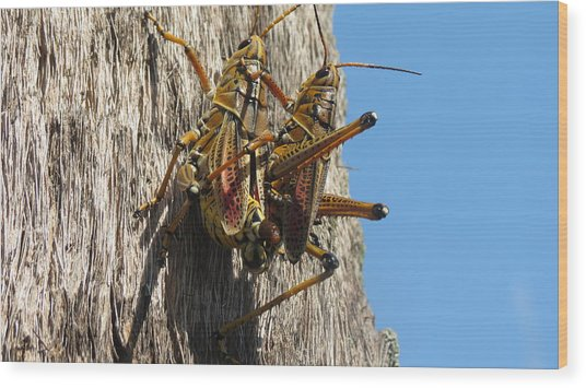 Grasshoppers Wood Print