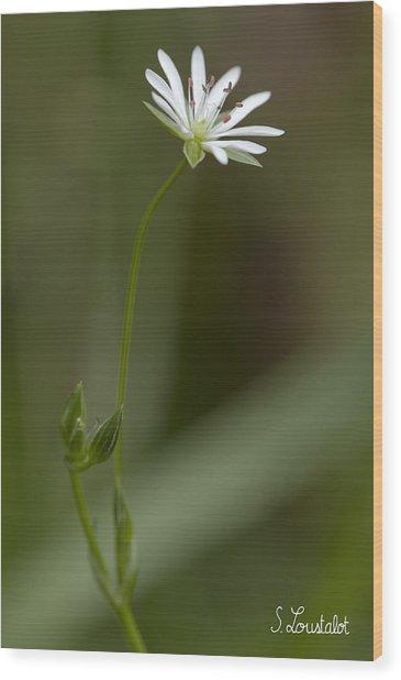 Grassleaf Starwort Wood Print by Stephane Loustalot