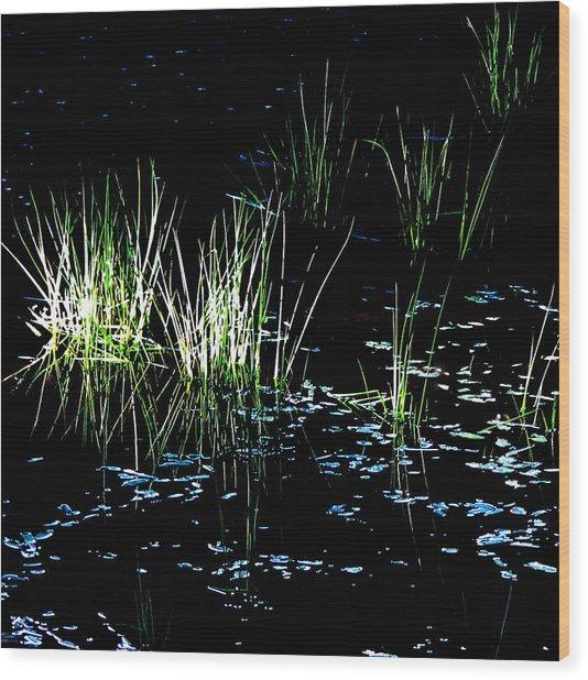 Grassy Lights Wood Print
