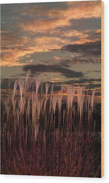 Grassy Sunset Wood Print
