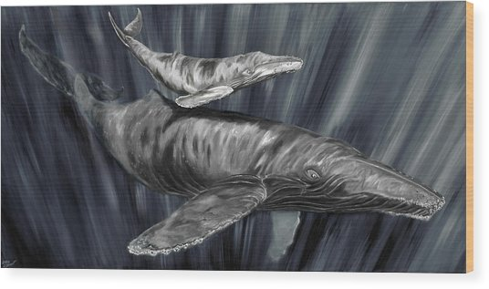 Gray Whales Wood Print