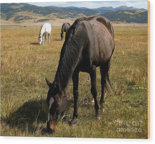 Grazing Buddies Wood Print by Claudette Bujold-Poirier