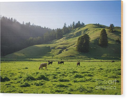 Grazing Hillside Wood Print