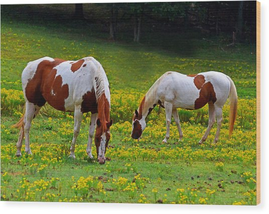 Grazing Horses 001 Wood Print
