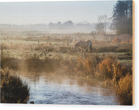 Grazing In The Mist Wood Print