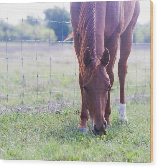 Grazing Wood Print by Lezlie Faunce