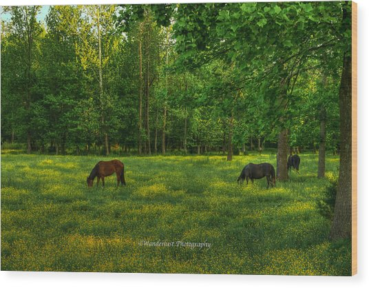 Grazing Wood Print by Paul Herrmann