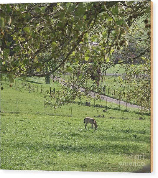 Grazing Under The Oak Tree Wood Print