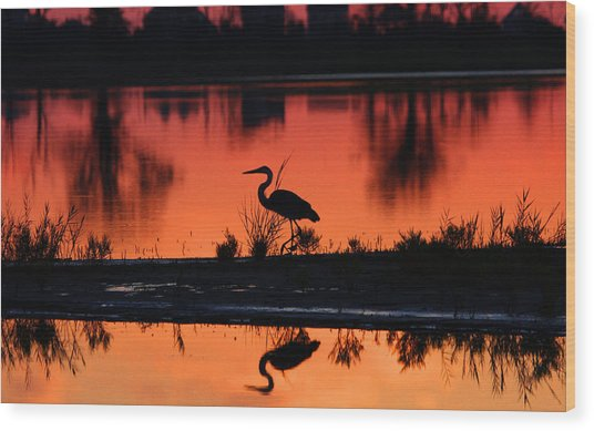 Great Blue Heron At Sunrise Wood Print