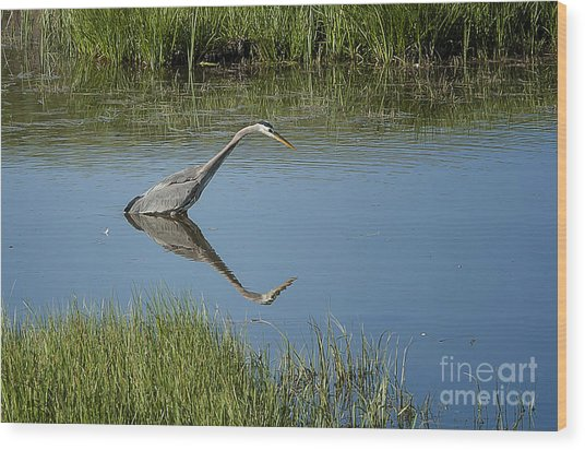 Great Blue Heron In Hayden Valley Wood Print by Bob Dowling