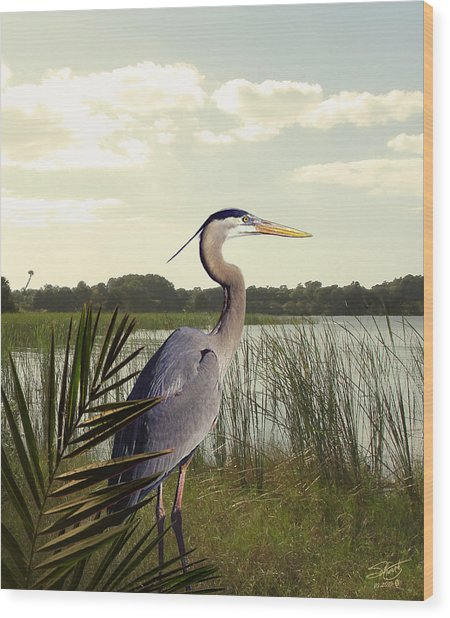 Great Blue Heron In The Bulrushes Wood Print by M Spadecaller
