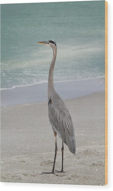 Wood Print featuring the photograph Great Blue Heron by Kim Hojnacki