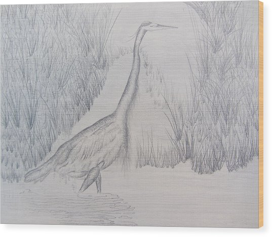 Great Blue Heron Pencil Drawing Wood Print by Debbie Nester