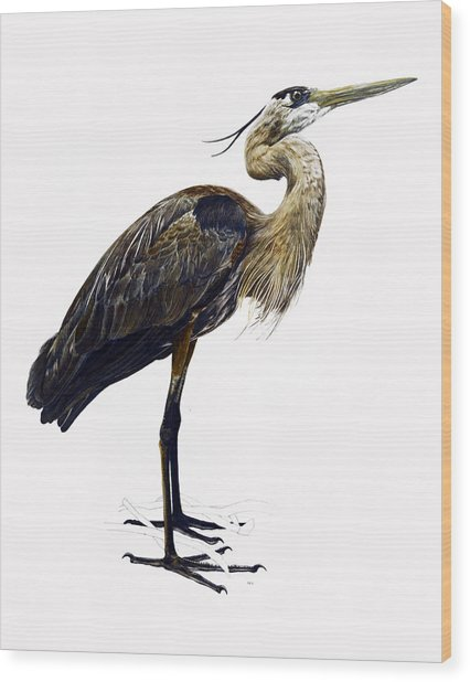 Great Blue Heron Wood Print by Rachel Root