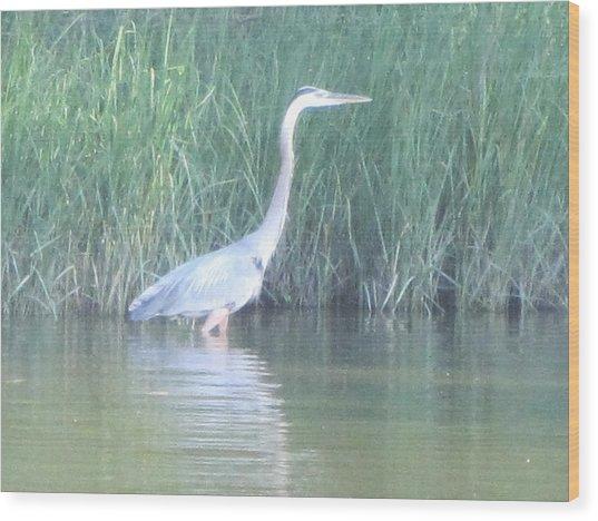 Great Blue Heron Reflecting Wood Print by Debbie Nester
