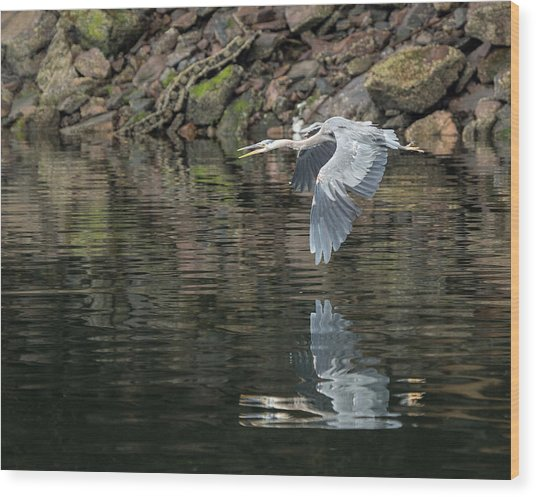 Great Blue Heron Reflections Wood Print